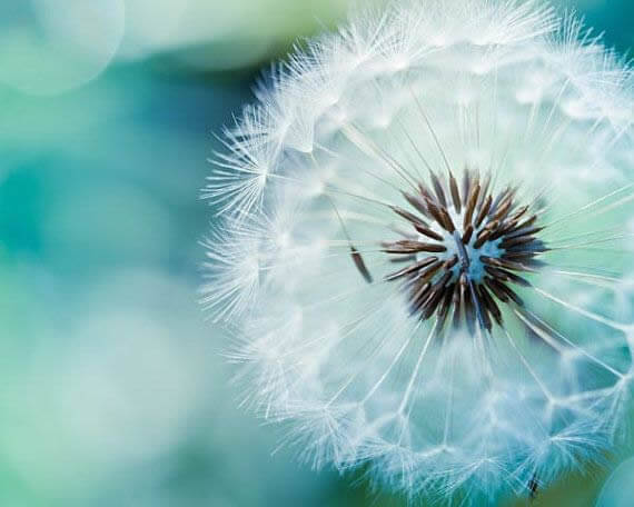 mindfulness trainingen - ¿En qué consiste el curso de Mindfulness de 8 semanas?